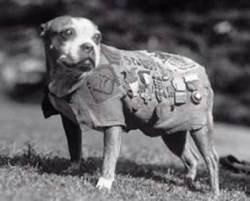 War Dog 1