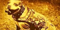 War Dog 3