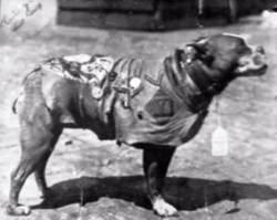 War Dog 4