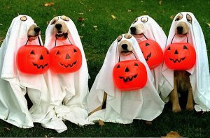 dogs-costumes-02